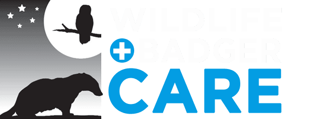Wildlife and Badger Care